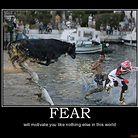 C138_funny_animals_bull