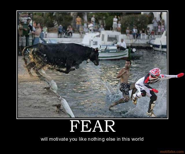 Funny Animals Bull Motocross Pictures Vital