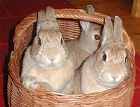 S200x600_bunnies