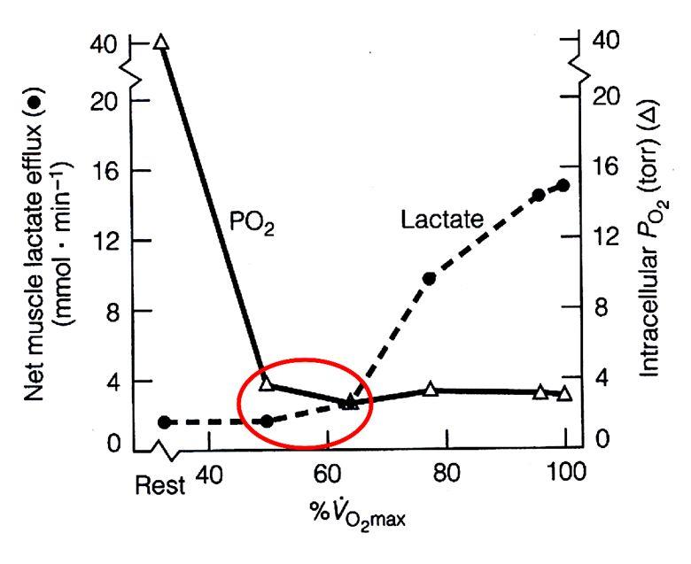 S780_lactate_po2_exercise