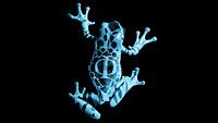 S200x600_fringe_frog