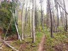 Woods ride
